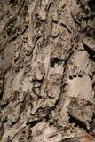 Casca de uma árvore Imagem de Stock