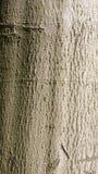 Casca de uma árvore Fotos de Stock Royalty Free