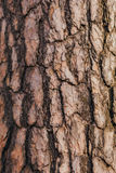 A casca de uma árvore Fotos de Stock