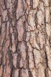 A casca de uma árvore Imagens de Stock