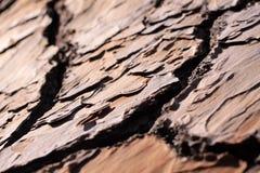 Casca de uma árvore de pinho Fotografia de Stock