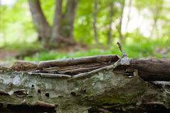 A casca de uma árvore inoperante Fotografia de Stock