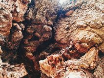 Casca de uma árvore inoperante velha fotos de stock royalty free