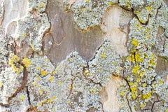 Casca de uma árvore plana Imagens de Stock Royalty Free
