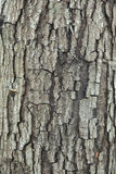 Casca de uma árvore velha Foto de Stock
