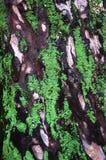 Casca de uma árvore velha com líquenes e folha fotos de stock royalty free