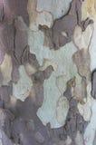 Casca de uma árvore velha - texturas fotografia de stock