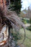 Casca de uma palma fotografia de stock royalty free
