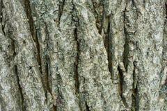 A casca de uma ?rvore velha coberta com o musgo Fundo natural do vintage criativo fotos de stock royalty free