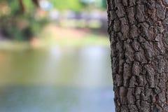 A casca de uma ?rvore velha Casca do lar?cio Textura detalhada da casca imagens de stock