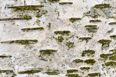Casca de vidoeiro Fotos de Stock