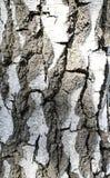 Casca de vidoeiro Estrutura branco-preta de madeira foto de stock royalty free