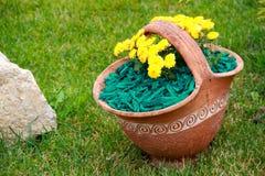 Casca decorativa verde da palha de canteiro Imagens de Stock Royalty Free