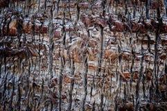 Casca detalhada abstrata da palma Imagens de Stock