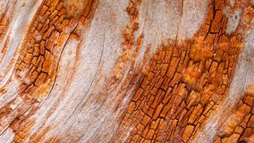 A casca do carvalho vermelho, com um teste padrão geométrico dado pela casca e pelas partes do tronco descobriu filme