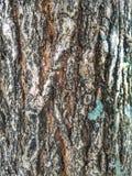 Casca do close up da árvore fotografia de stock