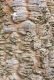 Casca do detalhe da textura da árvore imagem de stock
