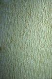 Casca do eucalipto imagens de stock