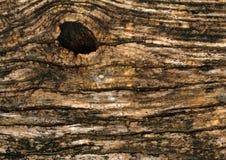 Casca do fundo da árvore Foto de Stock Royalty Free
