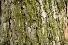 Casca do fundo da árvore Imagem de Stock Royalty Free