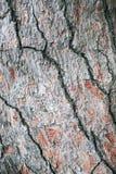Casca do fundo da ?rvore de pinho Foto macro imagem de stock royalty free