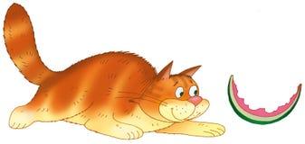 Casca do gato e da melancia Fotos de Stock Royalty Free