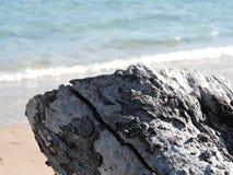 Casca do mar Imagens de Stock
