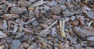 A casca do pinho afrouxa na natureza filme