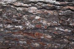 A casca do pinho surge fundos da textura, textura 2 Foto de Stock Royalty Free
