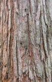Casca do Sequoia imagem de stock