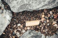 A casca do vidoeiro que encontra-se entre as pedras na praia borr?o Textura Fundo fotografia de stock royalty free