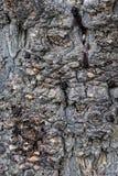 Casca dos detalhes de uma árvore fotos de stock