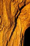 Casca dourada Imagem de Stock Royalty Free