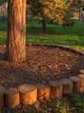 Casca e grama circulares da bordadura da base da árvore Fotos de Stock