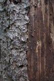 A casca e a madeira velhas Foto de Stock Royalty Free