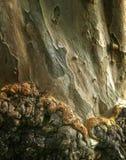 Casca e texturas de árvore Foto de Stock Royalty Free