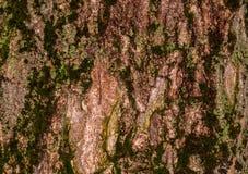 Casca enrugada rubi Imagens de Stock