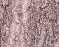 Casca enrugada rubi Foto de Stock