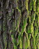casca, fatura, árvores foto de stock