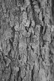 Casca inoperante da imagem preta que morre na selva Imagem de Stock