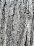 Casca marítima do pinho usada como a textura do fundo Foto de Stock