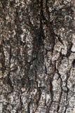 A casca, mostra sua idade Foto de Stock