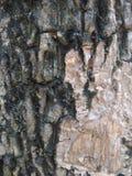 Casca na árvore Imagens de Stock Royalty Free
