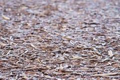 Casca natural coberta pela geada da manhã Fotos de Stock Royalty Free