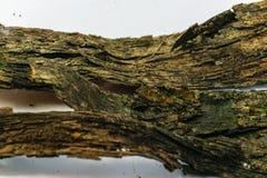 Casca olden Imagens de Stock