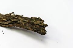 Casca olden Imagem de Stock Royalty Free