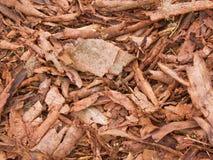 Casca Spruce Fotos de Stock