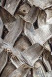 Casca Textured de um close up da palmeira Imagem de Stock Royalty Free