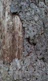 A casca velha com parte da madeira Foto de Stock