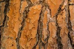 Casca vermelha Fotografia de Stock Royalty Free